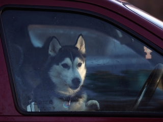Hot cars deadly for kids and pets
