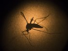 WHO: Zika vaccines months away from broad trials