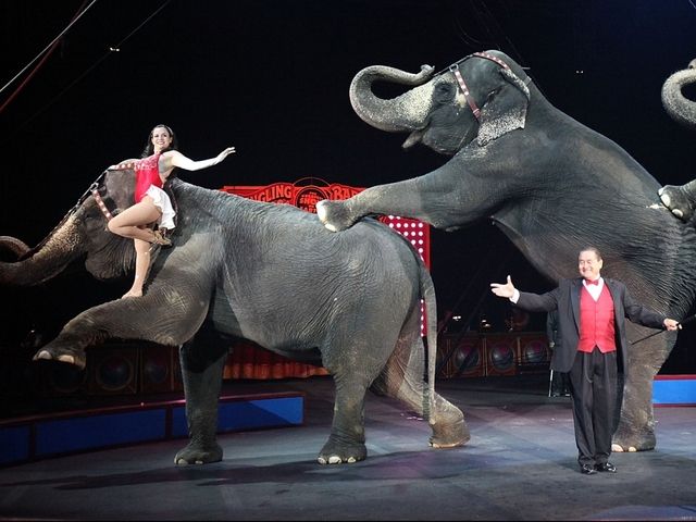 Gov. Cuomo signs bill to protect circus elephants in NY