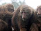 19 lab monkeys escape South Carolina compound