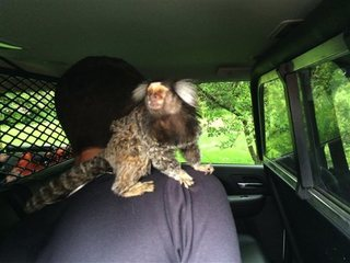 Driver had a monkey on his back before arrest