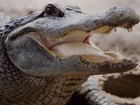 Alligator wrestling class? Yes, it's a thing
