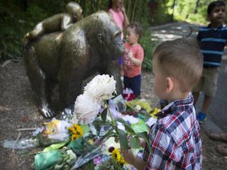 Cops investigate gorilla's killing