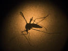Zika virus a concern for poor urban areas