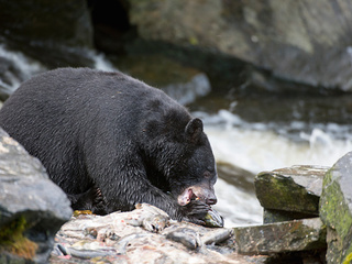 Black bear escapes, forces lockdown at Ohio zoo