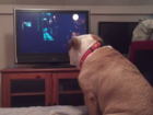 WATCH: Dog tries to protect girl in horror movie