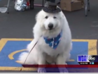 Dog elected as mayor of Minnesota town