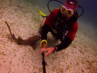 WATCH: Baby nurse shark very curious about diver