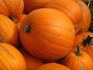 Fun things to do this weekend   October 20-22