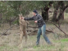 VIDEO: Man punches kangaroo to save dog