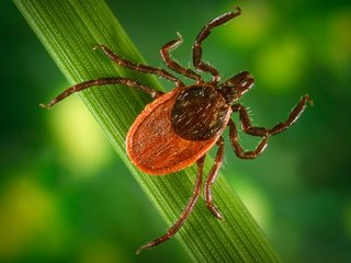 NY resident with tick disease dies