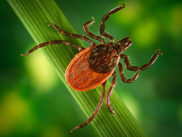 Health officials warn of newly confirmed tick virus in southern Indiana