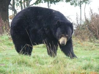 Bear attacks camp staffer in Colorado mountains