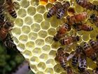Elderly woman stung over 100 times by bee swarm