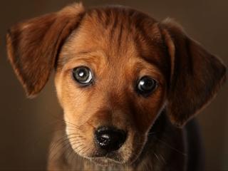 Cutting costs on pet prescriptions