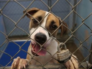 NY to require shelters to check for microchips