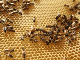 Honey, think twice before swatting those bees!
