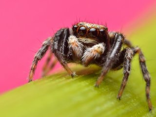 Some spiders mimic ants to avoid being eaten