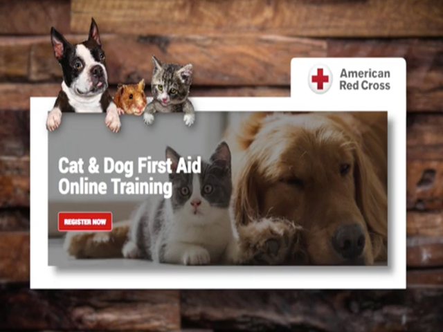 Online Class Could Help You Save Your Pets Life Wkbw Buffalo Ny