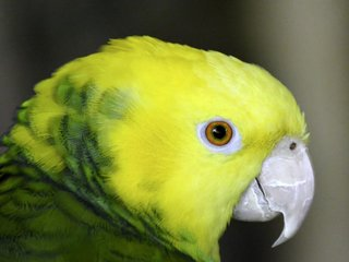 Parrots get nutrient supplements by eating clay