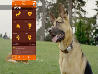 A health tracker for your pet