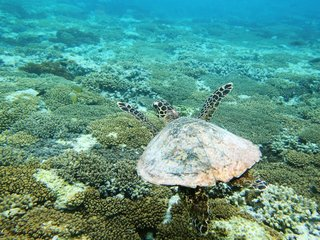 How Coral Transplants Could Save Coral Reefs