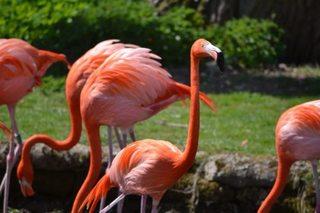 Bahamas resort hiring flamingo officer