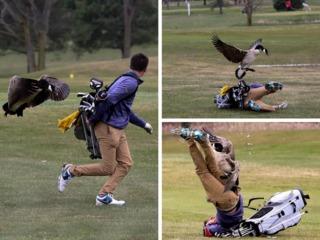 High school golfer taken down by goose