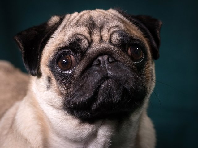 NYS lawmakers look to ban pet leasing