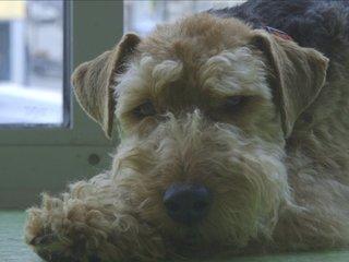Dream jobs: doggy daycare