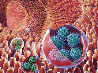 'Virus clusters' may be why Norovirus is so bad