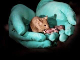 Same-sex mice give birth through gene editing